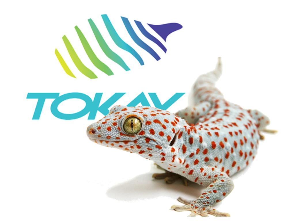 Tokay logo